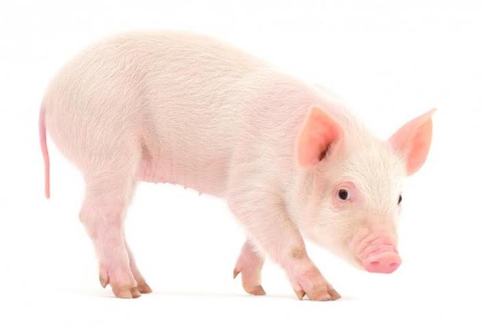 1 LITTLE .. NO, 30,000 LITTLE PIGGIES WENT TO NEWTOWNABBEY
