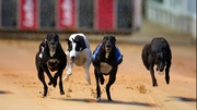 Shergar-style theft of greyhound in Limerick