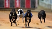 Shergar-style theft of €1m greyhound
