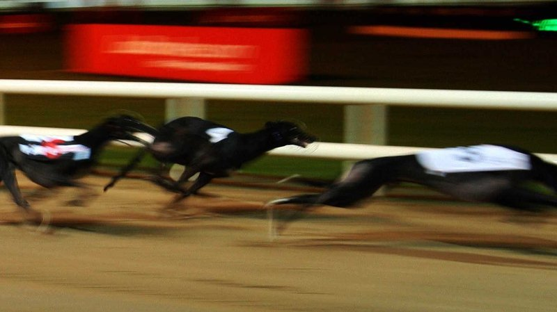 Funding stopped for four greyhound tracks after report