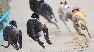 The greyhound tested positive for the substance three times within a four-week period
