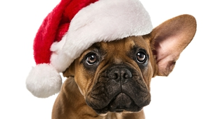Advice for buying pets this Christmas? Don't.
