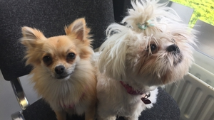 Molly and Zippy were brought to the DSPCA following a rescue operation last year