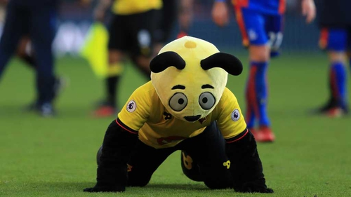 Harry the Hornet dives on the ground mocking Wilfried Zaha at the final whistle