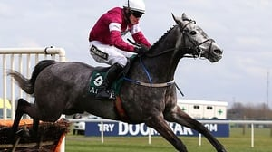 Petit Mouchoir will use the Leopardstown as a test for the Stan James Champion Hurdle