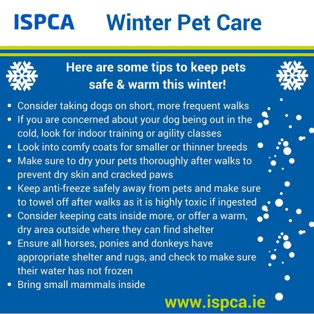 The ISPCA's Advice For Winter Care