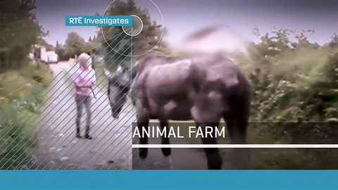 RTÉ Investigates: Animal Farm