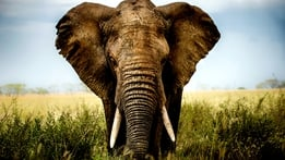 Natural World: Animal Weapons