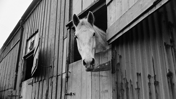 Horse in Stable (1967)