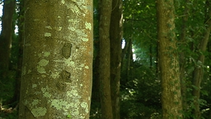 The forestry sector here is worth over €2 billion to the economy and employs 12,000 people in every county in the country