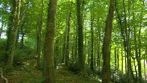 """""""In the past there was a strong bias against forestry in Ireland"""""""
