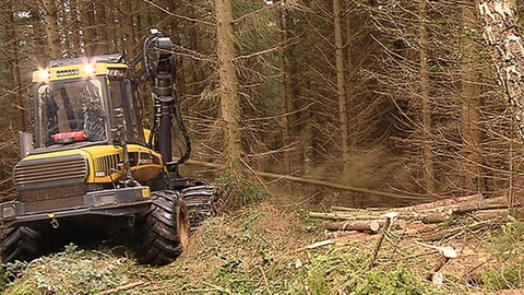 Ireland's Forestry Future | Prime Time