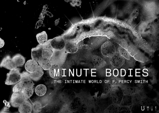 'Minute Bodies: The Intimate World of F. Percy Smith', a film by Stuart Staples