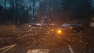 Fallen trees have been reported around the country (Pic: Dublin Fire Brigade)