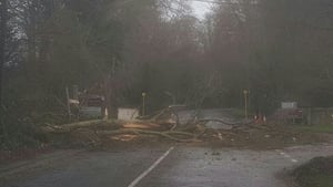 Fallen trees have been reported across the country (Pic: Dublin Fire Brigade)