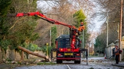 Work to clear trees in Shankill, Dublin (Pic: John Coveney Photography)