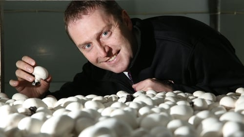 Padraic O'Leary is Managing Director of the Wexford-based Walsh Mushrooms