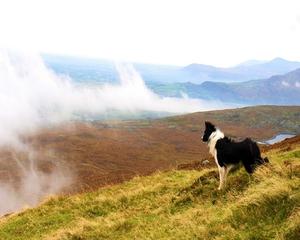 Winning Entry: Kathleen Horan, Mangerton Mountain, Killarney, Co. Kerry.