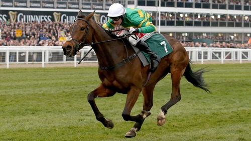Minella Rocco came second at the Cheltenham Gold Cup