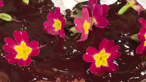 Eunice Power's Delicious Chocolate Cake