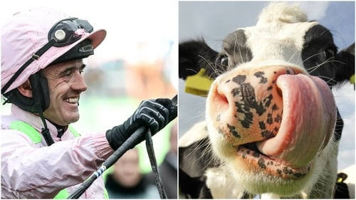 Ruby Walsh swaps horseriding for cow stomachs tonight!