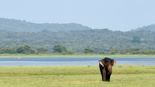 Elephants can recognise their bodies as obstacles to success in problem-solving