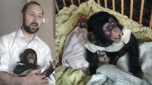 Vicky The Chimpanzee (1987)