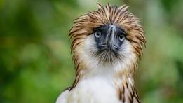 The Natural World: Monkey Eating Eagle