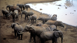 Natural World: Africa's Giant Killers