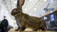 Airline 'saddened' after giant rabbit dies on flight