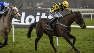 Bacardys was a 10/1 shot for the Champion Novice Hurdle at Punchestown