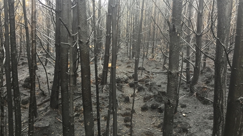 A third of the forest was destroyed in the blaze