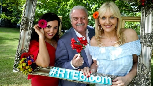 To celebrate the eleventh anniversary of the flower-filled festival there will be live television and radio broadcasts from the Phoenix parkfrom Thursday 1st to Monday 5th of June.
