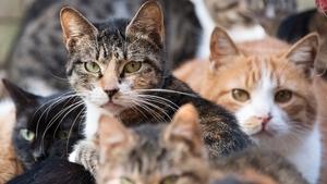 Nine cats walk freely around the Japanese company's office