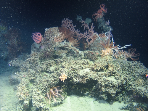 The scientists are searching where the Atlantic ocean drops from 300 metres to 3000 metres