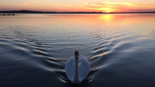 Sunset at Loughrea Lake. Photo: Ríona Holohan