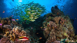 The Great Barrier Reef is the largest living structure on Earth