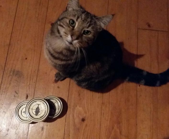 Essay:  non-monogamous cats