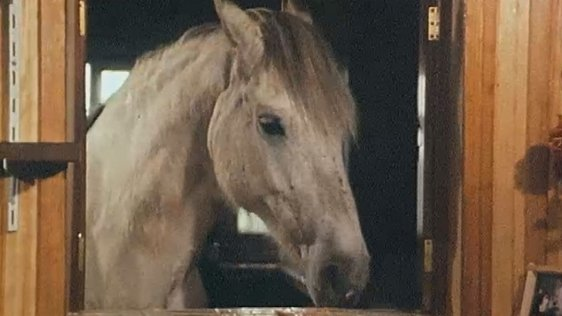 Horse, Galway (1982)