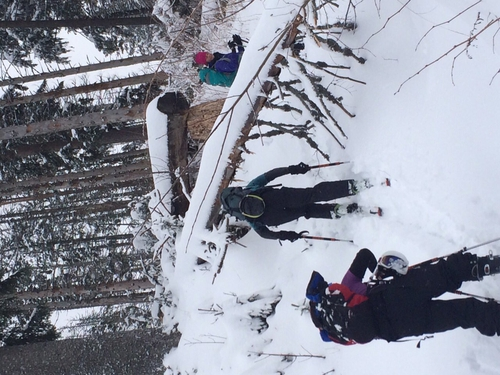 Fallen tree, ski scene, learning cross country skiing in the Tatra Mountains, Poland.