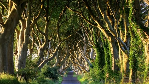 The Dark Hedges featured as The King's Road in the series