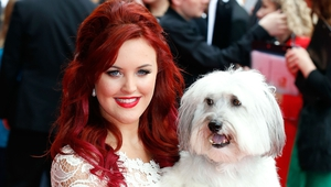 Pudsey won Britain's Got Talent alongside owner Ashleigh in 2012