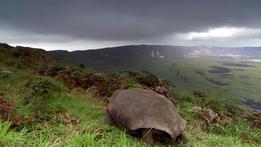 Natural World: Galapagos - Islands of Change