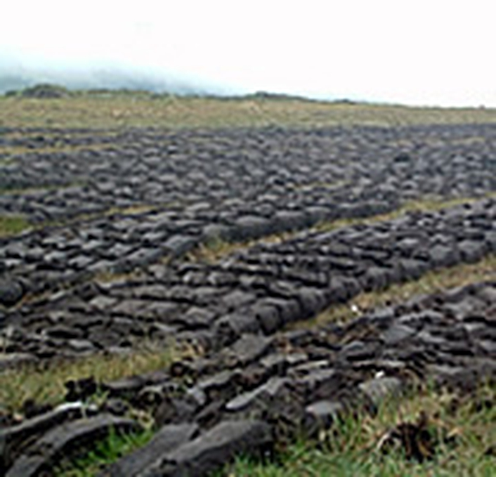 Essay:  the boglands of Offaly