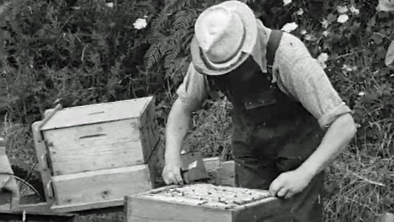On the Land Beekeeping (1962)