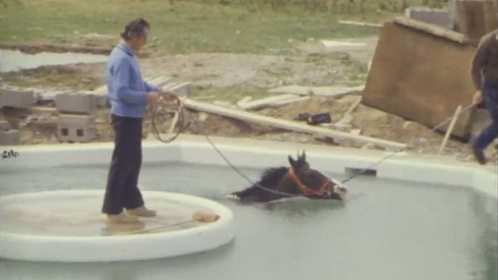 Horse swimming pool.