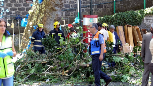 12 killed by falling oak tree in Portugal
