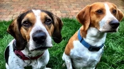 Harrison (right) - with friend, Cooper - recently had a costly operation to remove a ball from his stomach