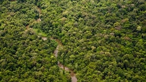 A researcher said the discovery indicates an enormous amount of species are waiting to be discovered in the Amazon