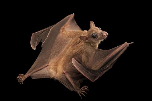 Nature File - Bats